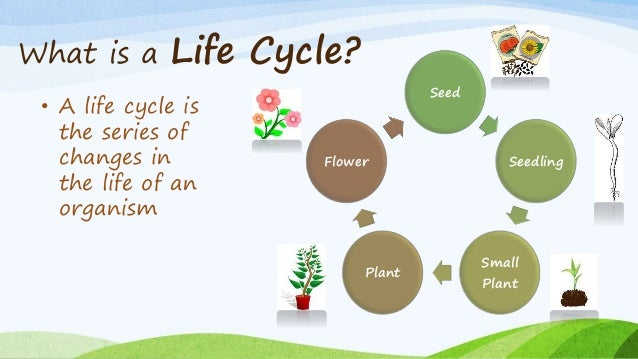 what is a life cycle a life cycle is the