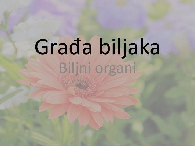 Građa biljaka Biljni organi