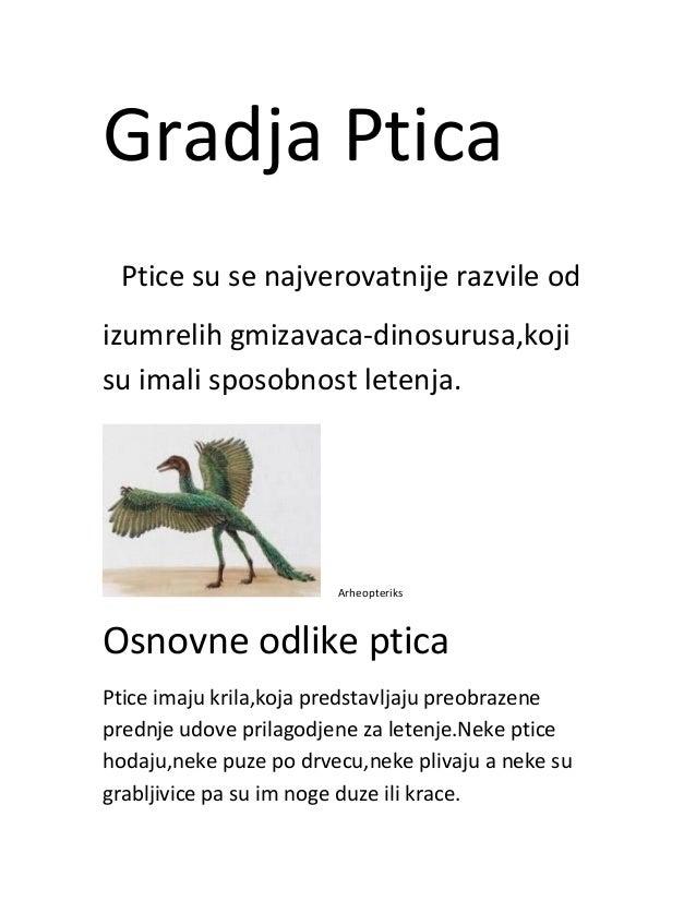 Gradja Ptica Ptice su se najverovatnije razvile od izumrelih gmizavaca-dinosurusa,koji su imali sposobnost letenja. Arheop...