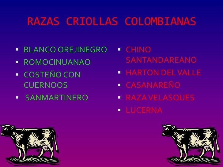 RAZAS CRIOLLAS COLOMBIANAS BLANCO OREJINEGRO    CHINO ROMOCINUANAO          SANTANDAREANO COSTEÑO CON          HARTON...