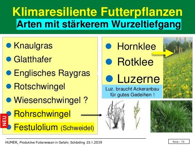 Folie - 73HUMER, Produktive Futterwiesen in Gefahr, Schärding 23.1.2019 Klimaresiliente Futterpflanzen Arten mit stärkerem...