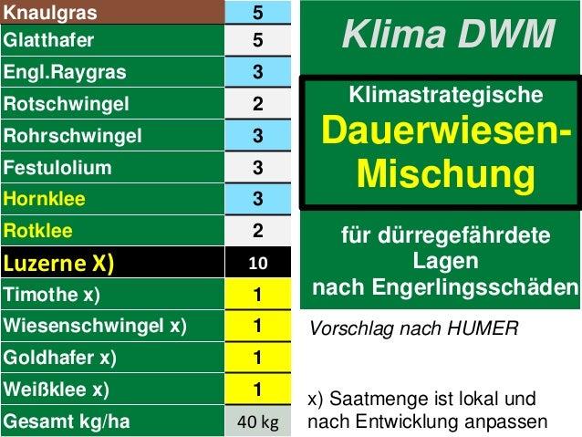 Klima DWM Klimastrategische Dauerwiesen- Mischung für dürregefährdete Lagen nach Engerlingsschäden Knaulgras 5 Glatthafer ...