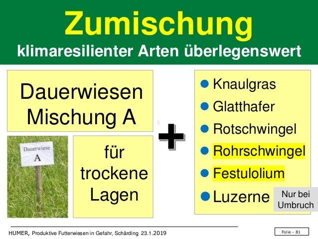 Folie - 81HUMER, Produktive Futterwiesen in Gefahr, Schärding 23.1.2019 Zumischung klimaresilienter Arten überlegenswert ⚫...