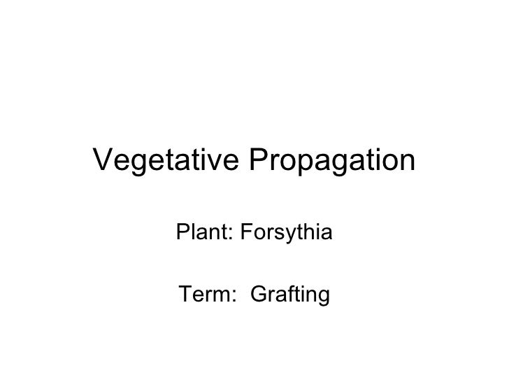 Vegetative Propagation Plant: Forsythia Term:  Grafting