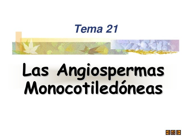 Tema 21 Las AngiospermasLas Angiospermas MonocotiledMonocotiledóóneasneas