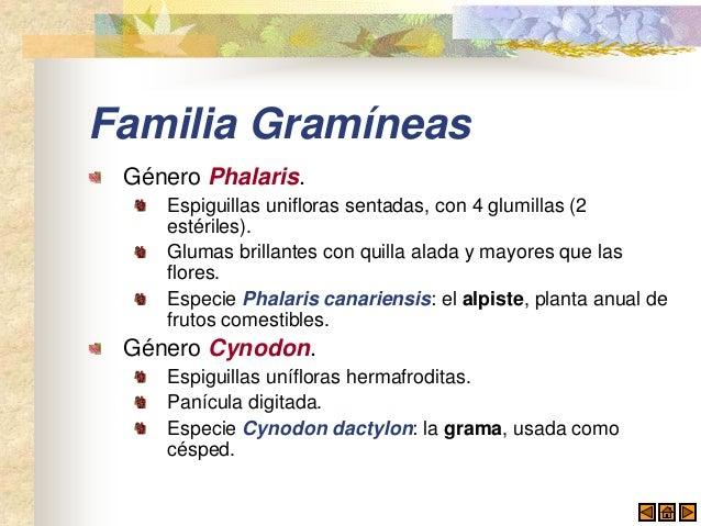 Gram neas for Ornamental definicion