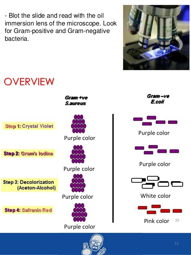 lab report 1 gram staining Basic microbiology lab reportinglab 2 - microscopy examination of bacteria introduction • bacterial staining or gram staining is th.