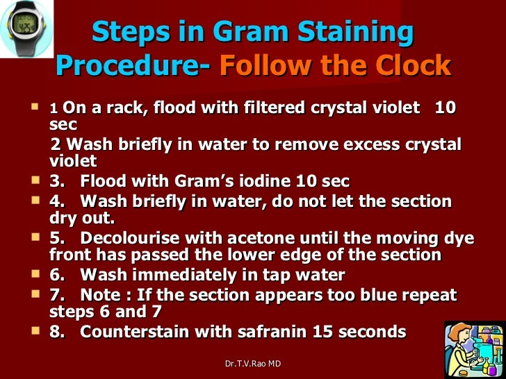 gram staining essay Introduction gram staining is the most essential and universally used staining technique in bacteriology laboratory for microscopy essay the format of the lab report is tailored to each institution or outpatient contract laboratory, although the.