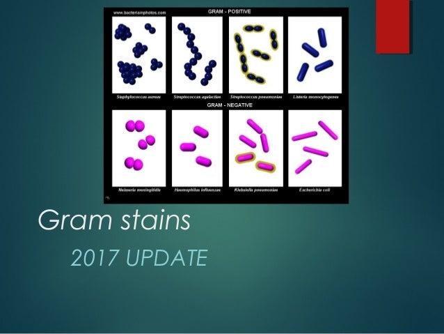 Gram stains 2017 UPDATE