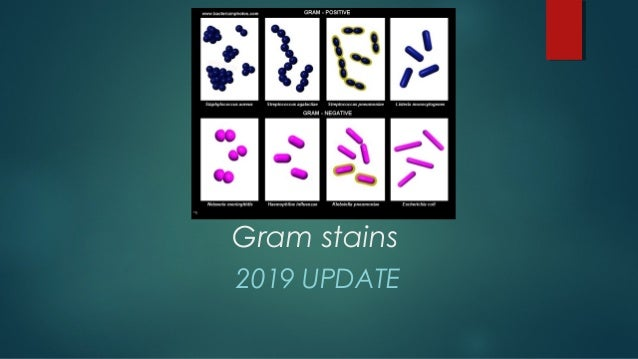 Gram stains 2019 UPDATE