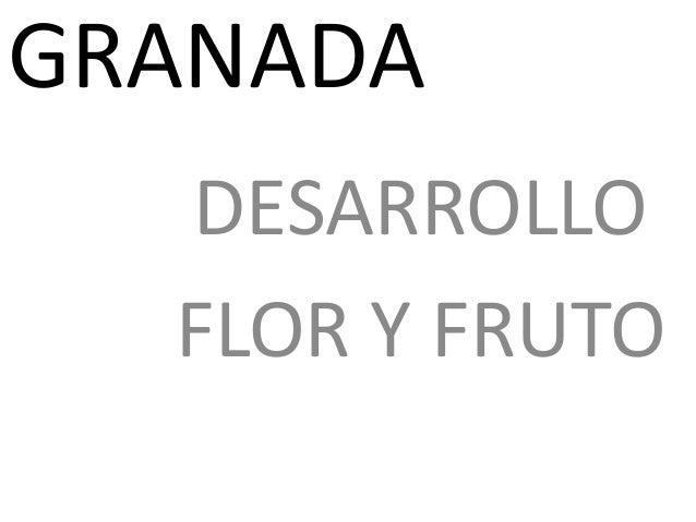 GRANADA DESARROLLO FLOR Y FRUTO