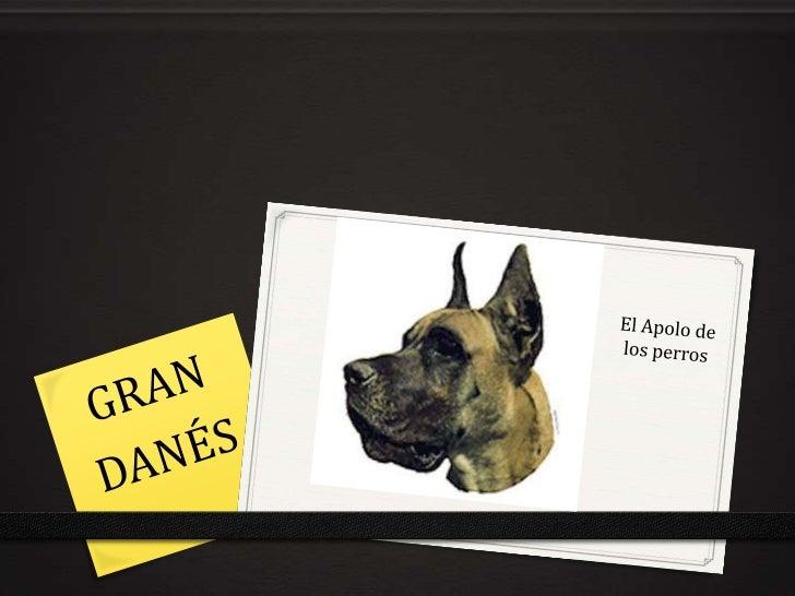El Apolo de los perros<br />GRAN<br />DANÉS<br />