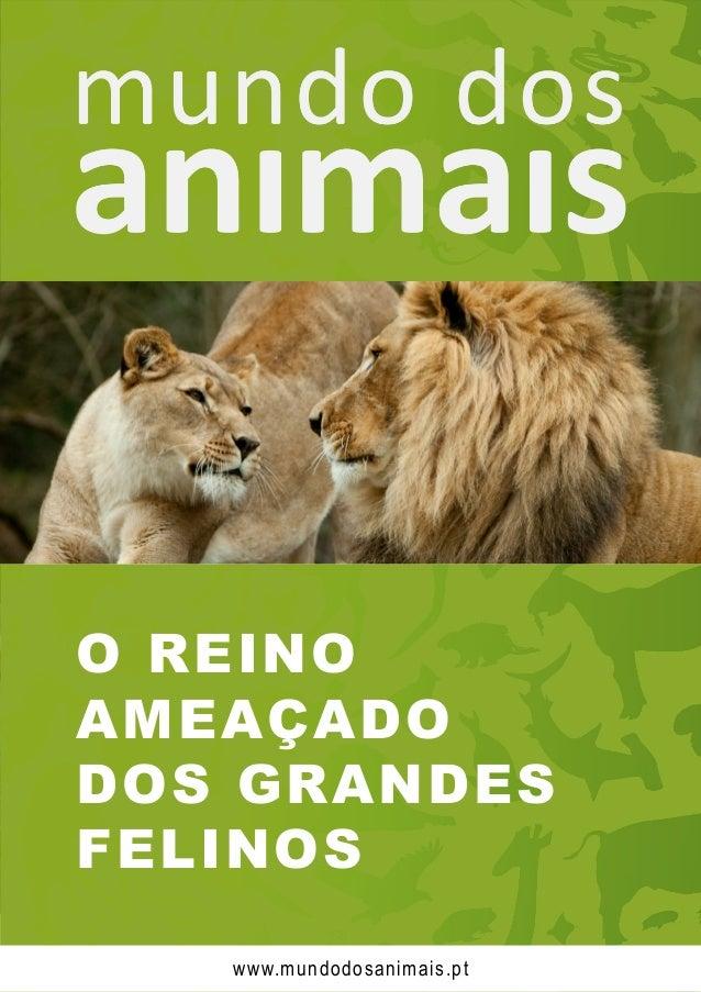 O REINO AMEAÇADO DOS GRANDES FELINOS www.mundodosanimais.pt