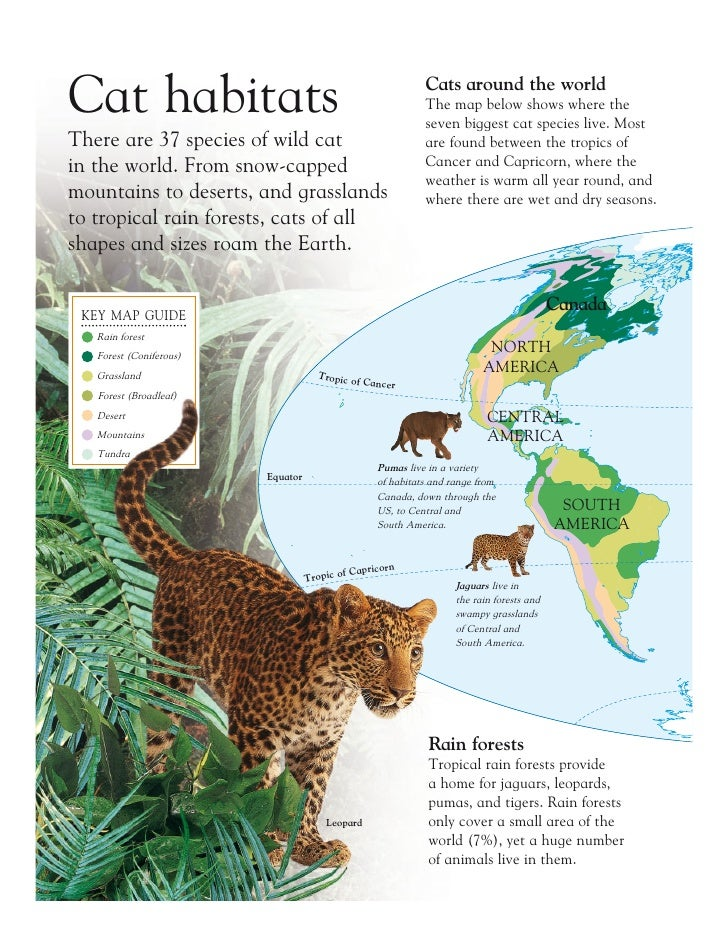 Grandes felinos big cats cat habitats cats around the world the map gumiabroncs Image collections