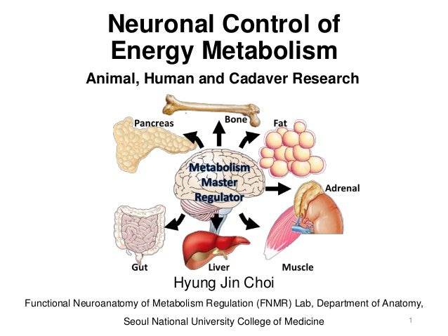 Control of Energy Metabolism