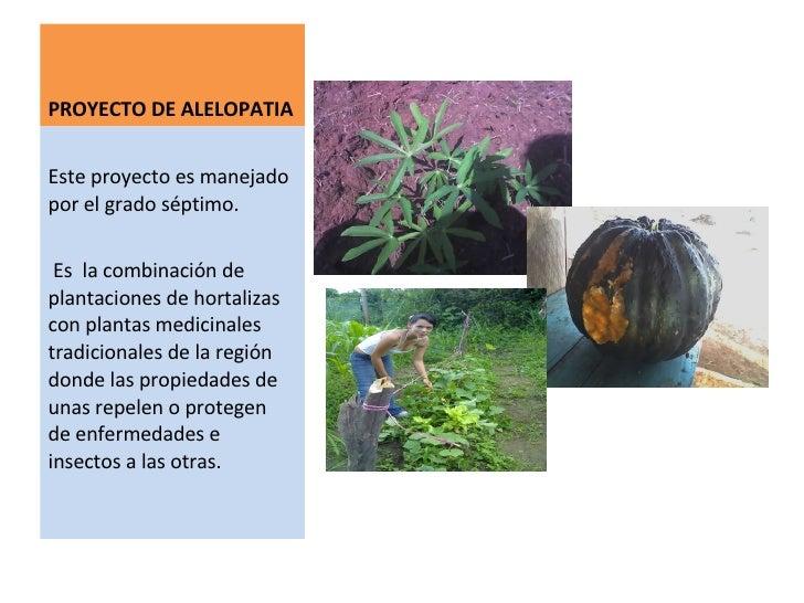 Granja integral para la vida for Alelopatia en hortalizas
