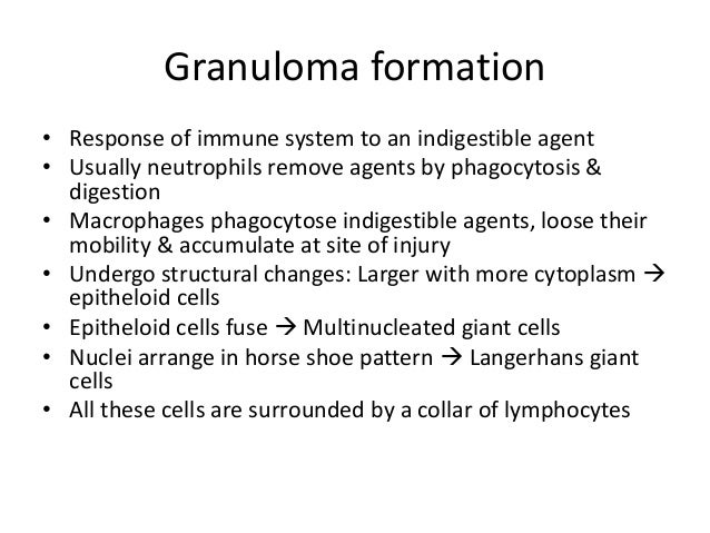 Granuloma formation • Response of immune system to an indigestible agent • Usually neutrophils remove agents by phagocytos...