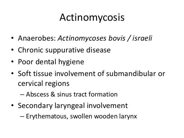 Actinomycosis • Anaerobes: Actinomycoses bovis / israeli • Chronic suppurative disease • Poor dental hygiene • Soft tissue...