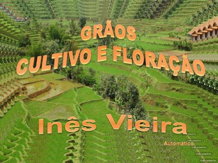 Música: Som da Natureza.     Imagens:Internet  inesdedes@gmail.comwww.mensagensvirtuais.com.br
