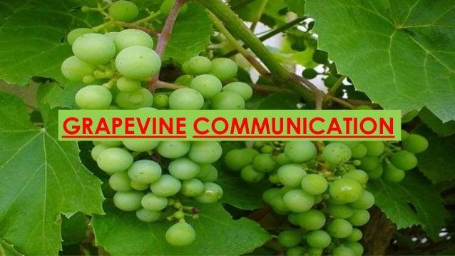 Grapevine communicationGRAPEVINE COMMUNICATION