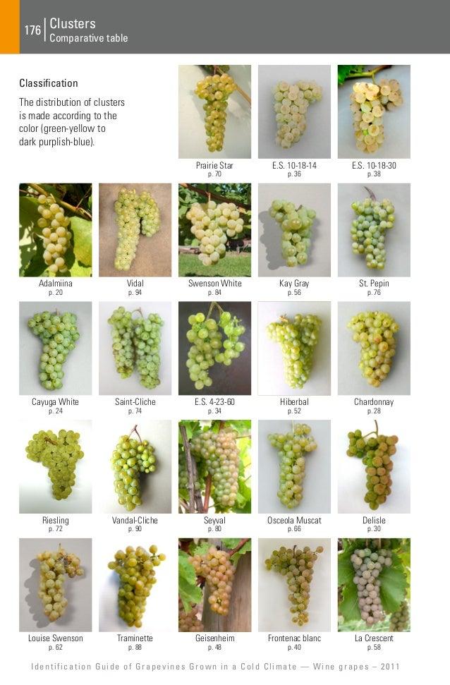 Pinot Noir, Merlot, Cabernet Sauvignon, Shiraz, Syrah ...