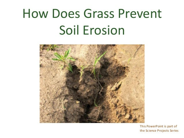 How Does Grass PreventSoil ErosionThis PowerPoint is part ofthe Science Projects Series