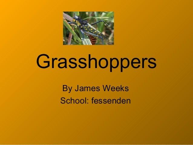 Grasshoppers  By James Weeks  School: fessenden