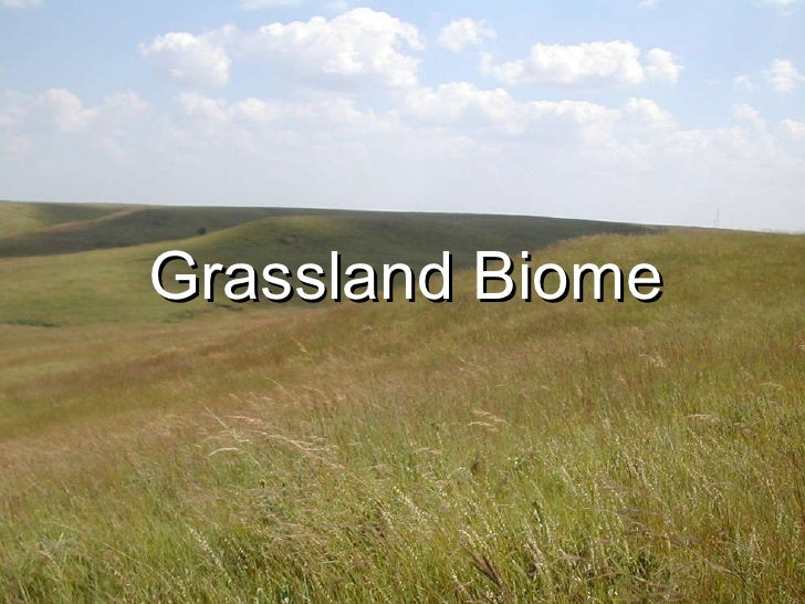 grassland biome A conservation covenant was applied by trust for nature pleg has been co-jointly managing this grassland with melton council from this period the signature.