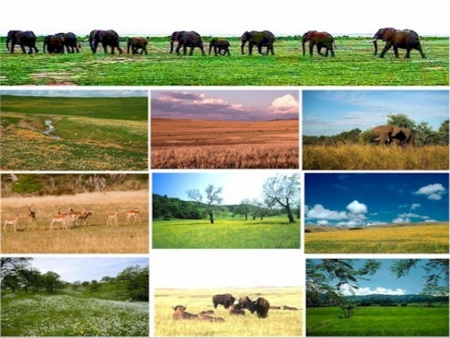 Grassland Ecosystem Pictures