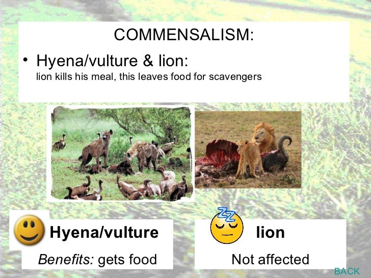 symbiotic relationship for grassland