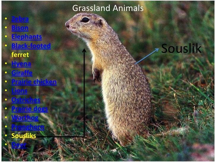 grasslands plants