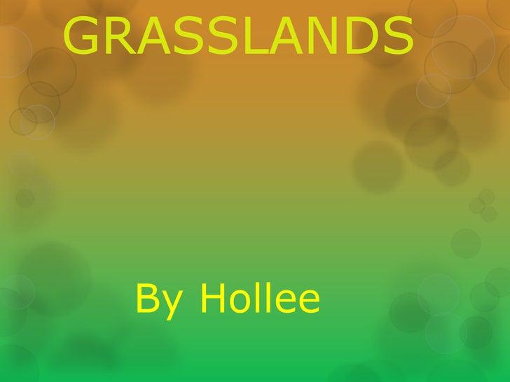GRASSLANDS  By Hollee