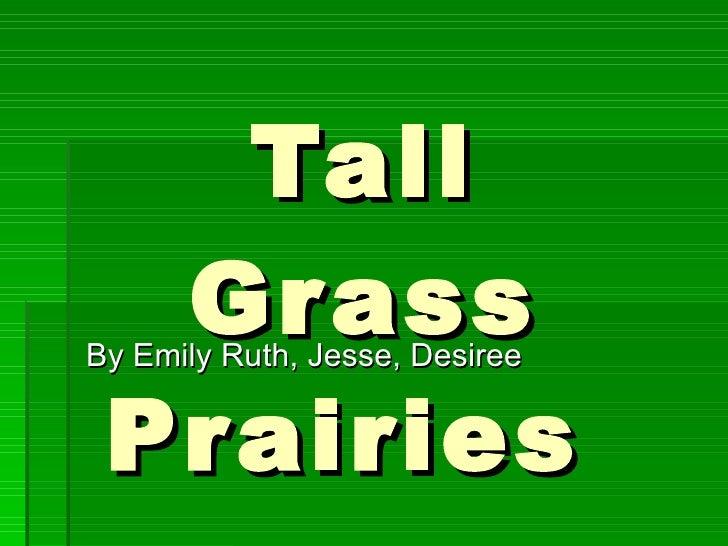 Tall Grass Prairies  By Emily Ruth, Jesse, Desiree