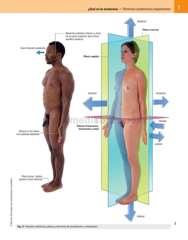 ©Elsevier.Fotocopiarsinautorizaciónesundelito. ¿Qué es la anatomía • Términos anatómicos importantes 1 Pies juntos, dedos ...
