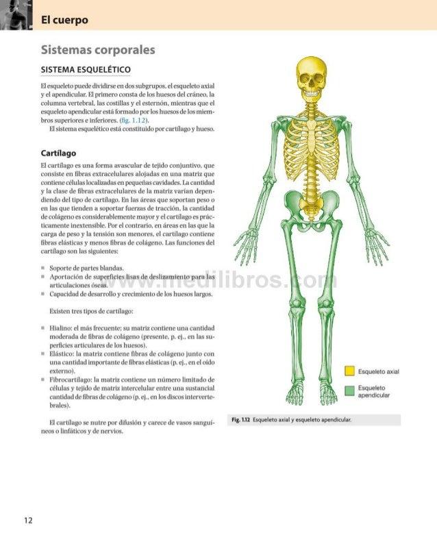 Sistemas corporales SISTEMA ESQUELÉTICO Elesqueleto puededividirseen dos subgrupos, el esqueleto axial y el apendicular. E...