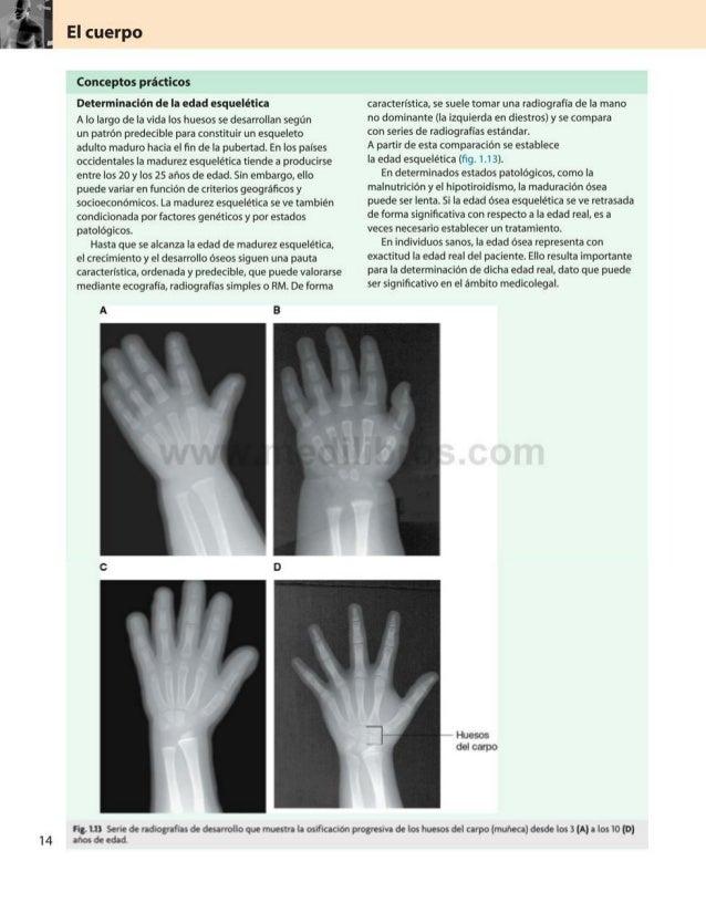 El cuerpo Conceptos prácticos Determinación de la edad esquelética A lo largo de la vida los huesos se desarrollan según u...