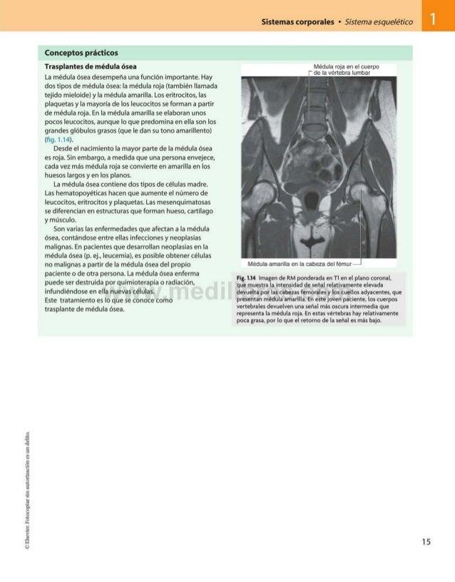 Sistemas corporales • Sistema esquelético Conceptos prácticos Trasplantes de médula ósea La médula ósea desempeña una func...