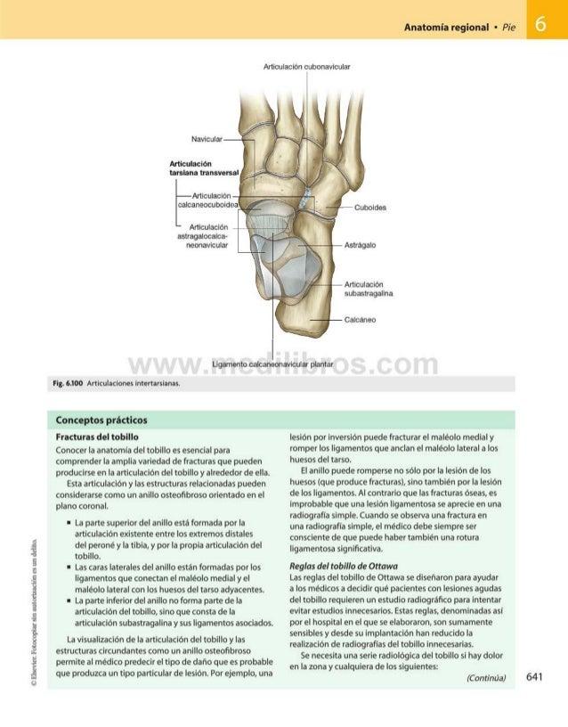 Gray anatomia para_estudiantes_3_opt