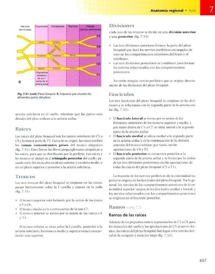 Bonito Grises Anatomía Ctv.ca Patrón - Imágenes de Anatomía Humana ...