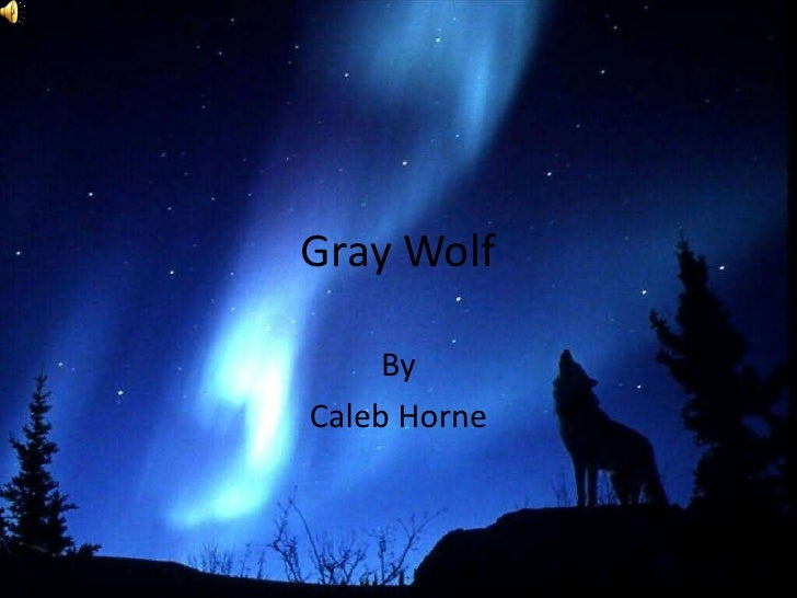 Gray Wolf<br />By<br />Caleb Horne<br />