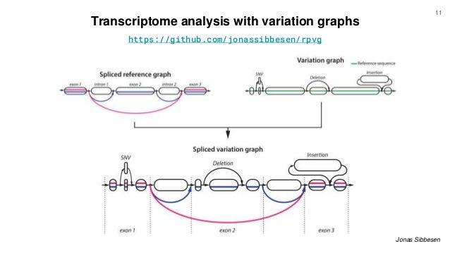 Transcriptome analysis with variation graphs Jonas Sibbesen https://github.com/jonassibbesen/rpvg 11