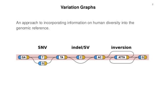 Variation Graphs An approach to incorporating information on human diversity into the genomic reference. 2