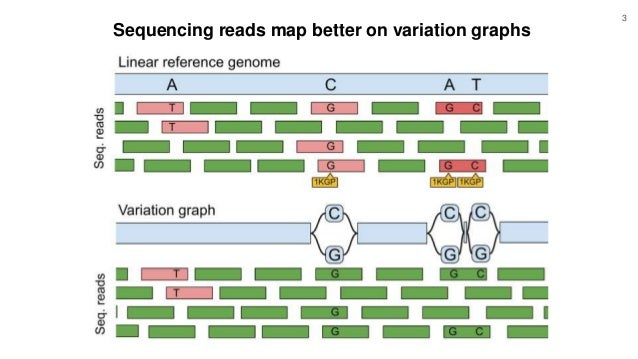 Sequencing reads map better on variation graphs 3