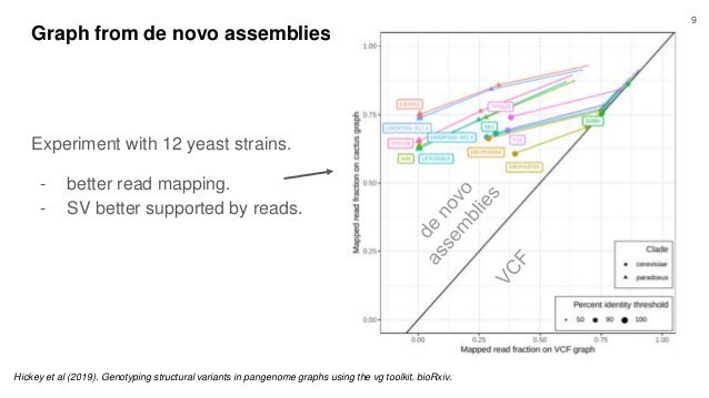 Graph from de novo assemblies Experiment with 12 yeast strains. - better read mapping. - SV better supported by reads. Hic...