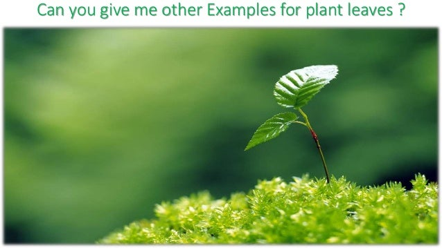 Parts Of The Plant It turns out these plant lovers love beef as well vegan 1: parts of the plant