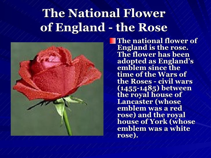 Great britain the national flag of england saint george 7 the national flower mightylinksfo Image collections