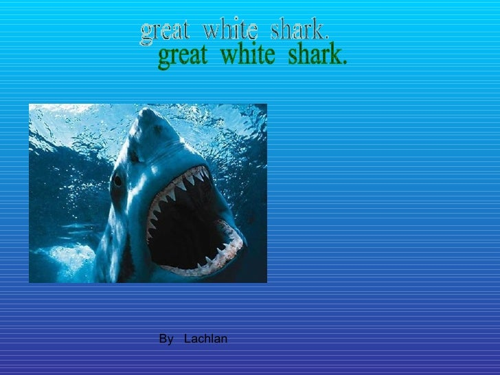 By  Lachlan great  white  shark.