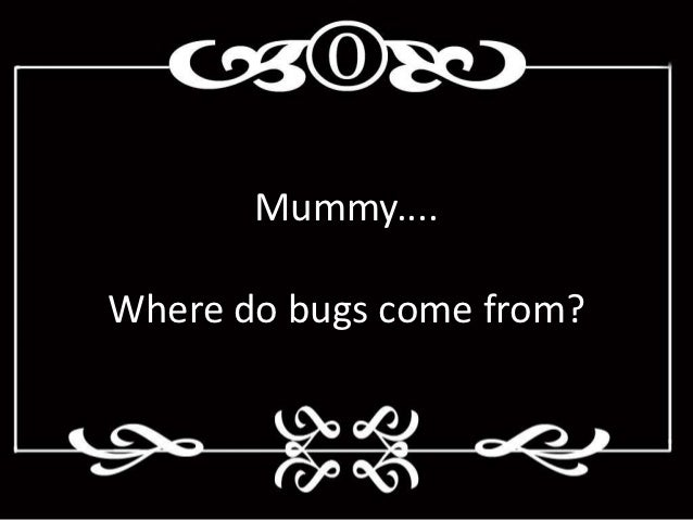 Mummy....Where do bugs come from?
