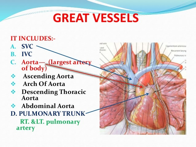 Great Vessels Artery