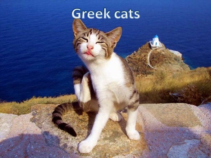 Greek cats Slide 1